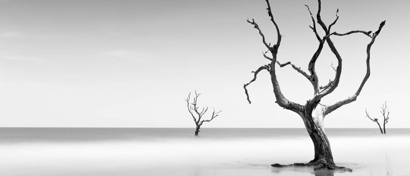 trees-Ivo Kerssemakers